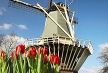 Hollandse Molens / by Lisetta Estevez
