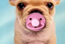 Cutie Pies / by Maria Harris-James