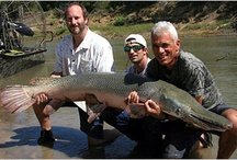 River Monsters / Meet the killer fish from River Monsters. See incredible pictures, find out what they're like, learn why some are considered maneaters and others are just misunderstood, and more!  / by AnimalPlanet