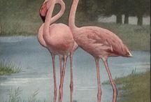 Flamingos / by Dita Make Up