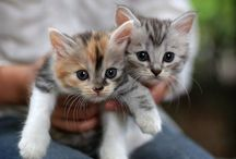 Kitties / by Briana McNeil