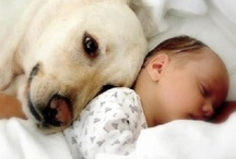 Dogs & Puppies / by Donna Thomas