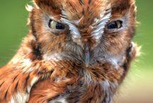 Owl Heaven / by Lorenda Rousseau