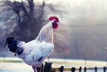 Farm   Inspiration / by Kit Stansley