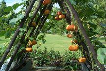 My dream garden.... / by Cindy Scott Carter