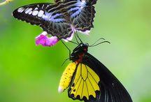 Butterflies <3 / by Kelly Easter