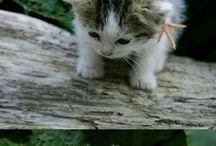 Awwwe Cute! / by Erin Wilkening