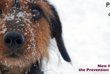 Support Homeless Pets! / by New Hampshire SPCA