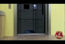 Elevator Pranks / by Just For Laughs Gags
