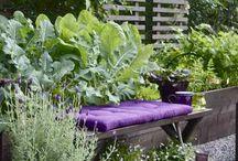 Garden Benches / by Karen Lauridsen