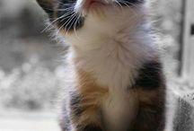 Awww cuties / by Christine Broxson Wynne