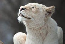 I am lioness, HEAR ME ROAR!!!! / by Johanna Easterday