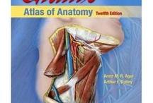 Anatomy  / by Mariam C