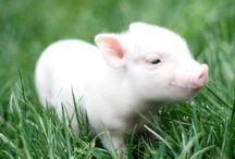 Pig-y-Pou / by Jennyfer Le Forestier