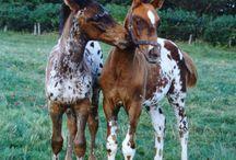 HORSE APP / by Mary Dumke