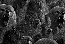 Bears Bears Bears Bears / by Todd Mellon