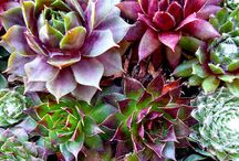 GARDENING IDEAS AND TIPS / by Beverly Knous