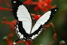 Butterflies and Moths / by Scherrie Robertson