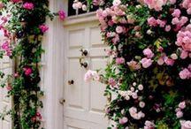 Flowers / by Aiko Matsuda
