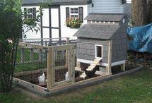 Chickens !! / by Amanda Marsman