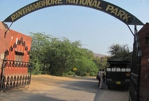 Ranthambore Park Gallery / by Ranthambore National Park