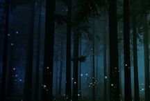 The Enchanted Forest / by Amy Gerassimoff