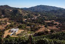 Malibu Rocky Oaks Vineyard / by Chris Schmitt Photography