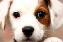 Dog-o-licious / by Robin Swanson
