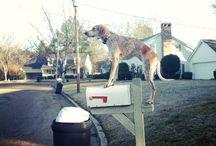 Dogs / by Social Abundance Marketing