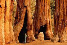 California - My Heart / by Linda Deweese-Brown