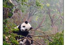 Chengdu / China / by Guido Houben