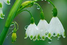 Flowers / by Dean Davis