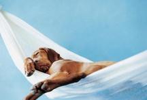Entre perros y gatos  / by Natalie Cherigny