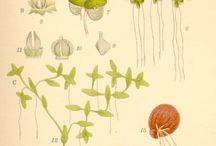 Botanical and Scientific Illustration / by Michelle Webster
