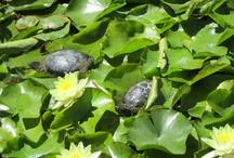 turtles <3 / by Leslie Wagoner