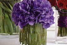 Purple Passion / by Yolanda Reyna