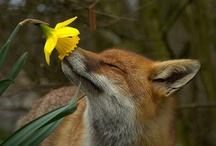 Wildlife at its Best  / by Atheana Kalantzakos-Rowe