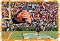 War eagle / by Michelle Bass