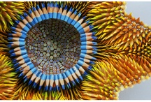 Pencil Art / How a pencil can transform into incredible art! / by Pencils of Promise