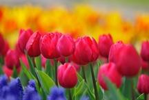 Flowers / by Tomoko