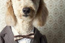 Dogs / by Melinda Bradley