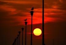 rays of sunshine / by Sheila Eibes