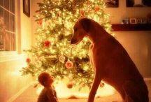 My Dogs / by Hattie Neal
