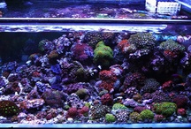 Reef / Working on my reef tank.  Looking for inspiration / by Eric