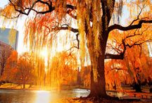 Autumn  / by Sabrina Hudson Hodge
