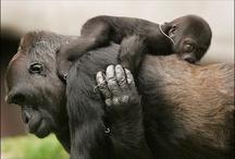 Animals (: / by Jenai Meints