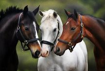 Horses / by Darlyne Crow