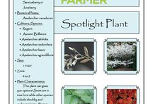 Spotlight Plant / by Backyard Farmer