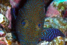 UNDERWATER BEAUTIFUL CREATURES AND PLANTS / GOD'S BEAUTIFUL CREATION / by Sikha Datta