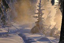 nature's beauty / by Pam Somogyi